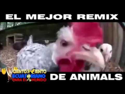 El gallo que canta electronica