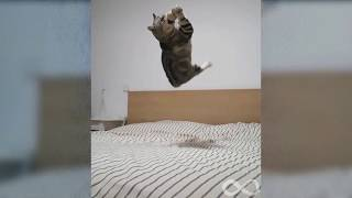 🐶🐱Funny And Cute Animals Compilation #1🐶🐱Funny Infinite Virals Video 2020