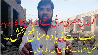 Golden Miseri Murgi Egg Farming Desi Murgi Farming Hen Farming Complete Procedure in Urdu Hindi