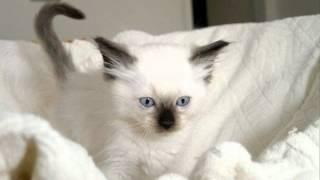 Фото красивых кошек