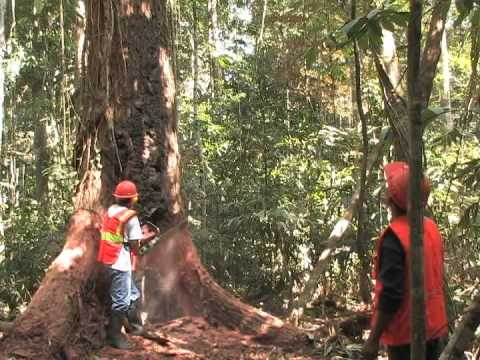 Video PD 233 03 R: Application Of Intermediate Technologies For Sustainable Forest Harvesting