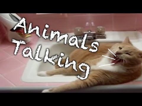 NEW Talking Animals Compilation