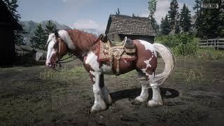 Coat Gypsy Cob Appleby Romany Coloured Pony Horse Lead Hanger