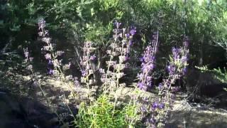 Mountain Vegetation, East County San Diego 5/26/12