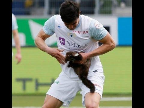 Cat On Football Field Youtube