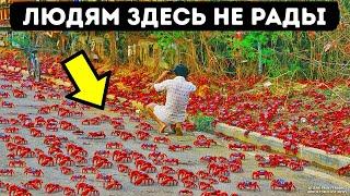 Остров, где 100 млн крабов окрасят землю в красный цвет прямо под вашими ногами