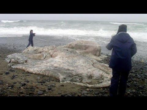 Bizarre Things Found On Beaches Around The World