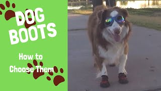 Dog Boots  How to Choose Them and Train Your Dog to Use Them