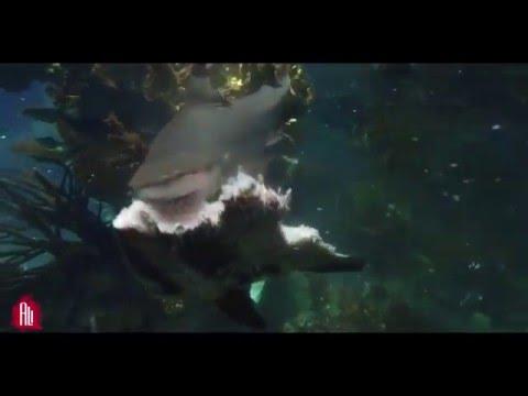 Shark Attack - Aquarium scientific Kuwait