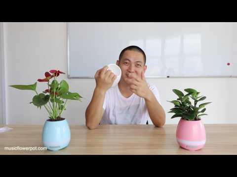 Smart Music Flowerpot Review