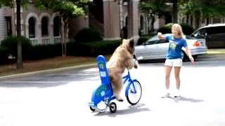 Dog Learning How To Drive A Bike?
