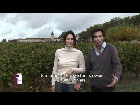 Understanding Bordeaux Sauternes at Chateau Guiraud Estate- TRAILER