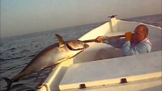Funny Yellow Fin Tuna Video, Muscat Oman(Found an old video from 2005. Kerry and I out chasing dolphins early morning when we hooked up this lovely YFT. Getting it in the boat proved hilarious for ..., 2012-05-08T11:46:16.000Z)
