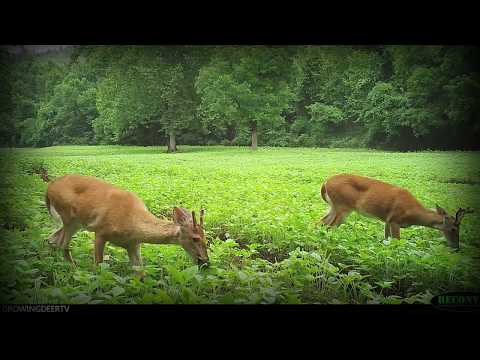 Why we make hunting videos: sharing hunting strategies and habitat improvement projects