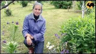 Сад на склоне. САД день за днем №5.(Сегодня вы узнаете, как решить одну из распространённых проблем сада и как использовать многолетники в..., 2012-09-01T04:23:05.000Z)