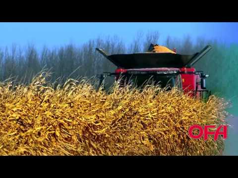 OFA Farm Facts: Harvesting Corn in Ontario