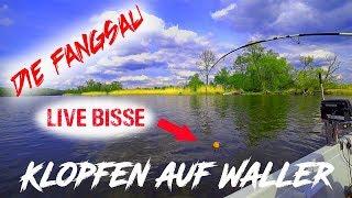 Klopfen Auf Waller / Wels / Live Bisse / Live Drill / Die Fangsau Angelt An Der Oder