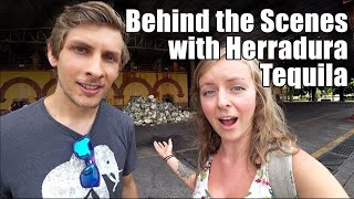 #129. Behind The Scenes with Tequila Herradura in Mexico