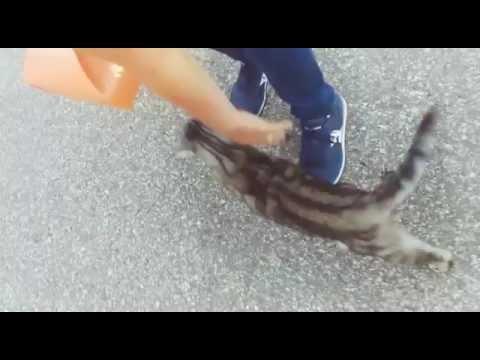 🐾💗little european kitten,