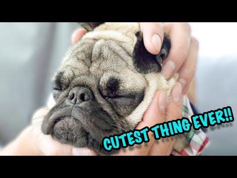 DIY SLEEPY PUPPY PUG! (45 SECONDS)