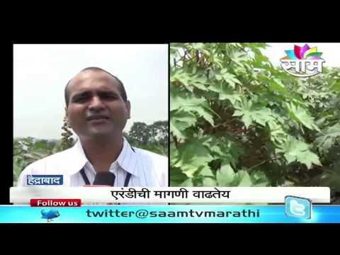 Oilseeds cultivation good for dryland farmers