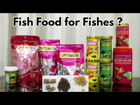 Best & Cheap Fish Food In India