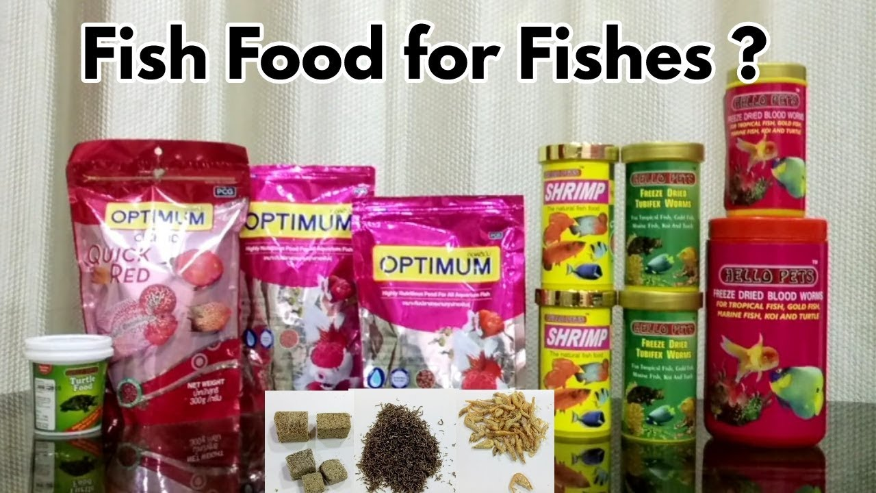 Best Cheap Fish Food In India Youtube