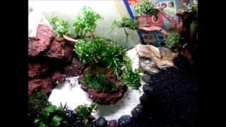 Cara membuat aquascape untuk pemula