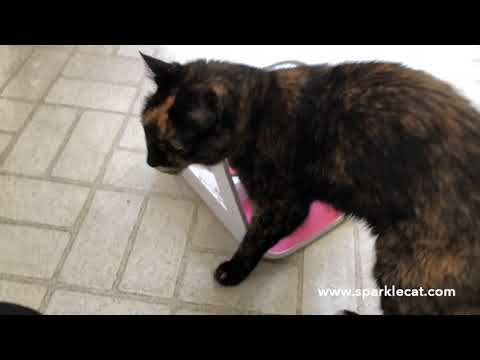 foiling-food-stealers-with-the-surefeed-microchip-pet-feeder