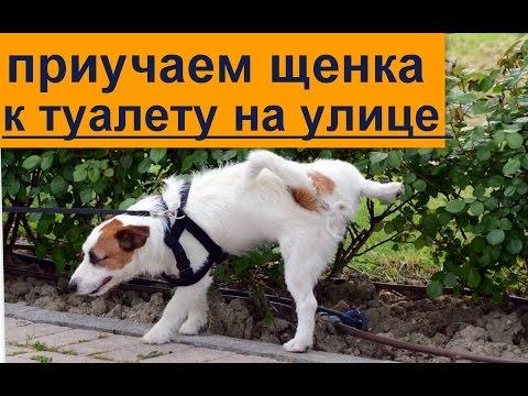 щенок приучение к туалету на улице