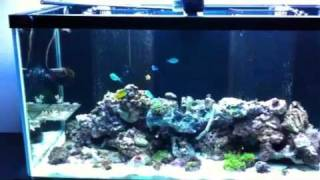 Follow Up To Aquarium Cabinet