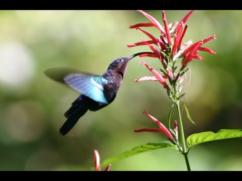 Planting for Pollinators: Welcoming Hummingbirds, Bees, and Butterflies to Your Home Garden