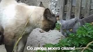 Кошки говорят ч.1