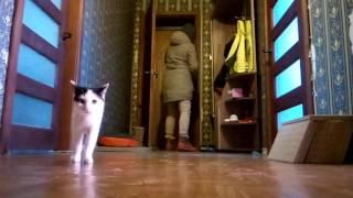 Кошки, когда хозяев нет дома