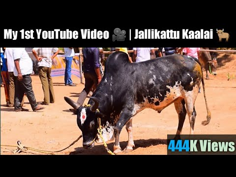 Erode Cattle Show