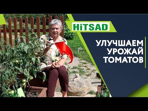 Ускоряем Рост Томатов 🍅 Как Улучшить урожай Помидор 🍅 ЙОД для помидор