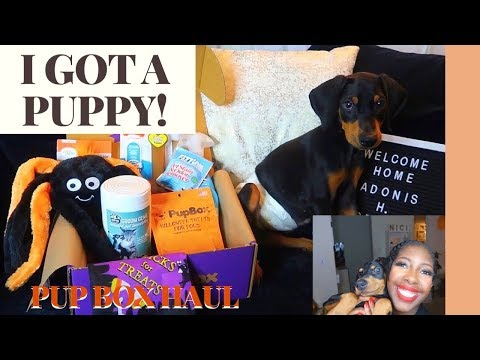Pup Box Review | Meet My New Puppy, Adonis!