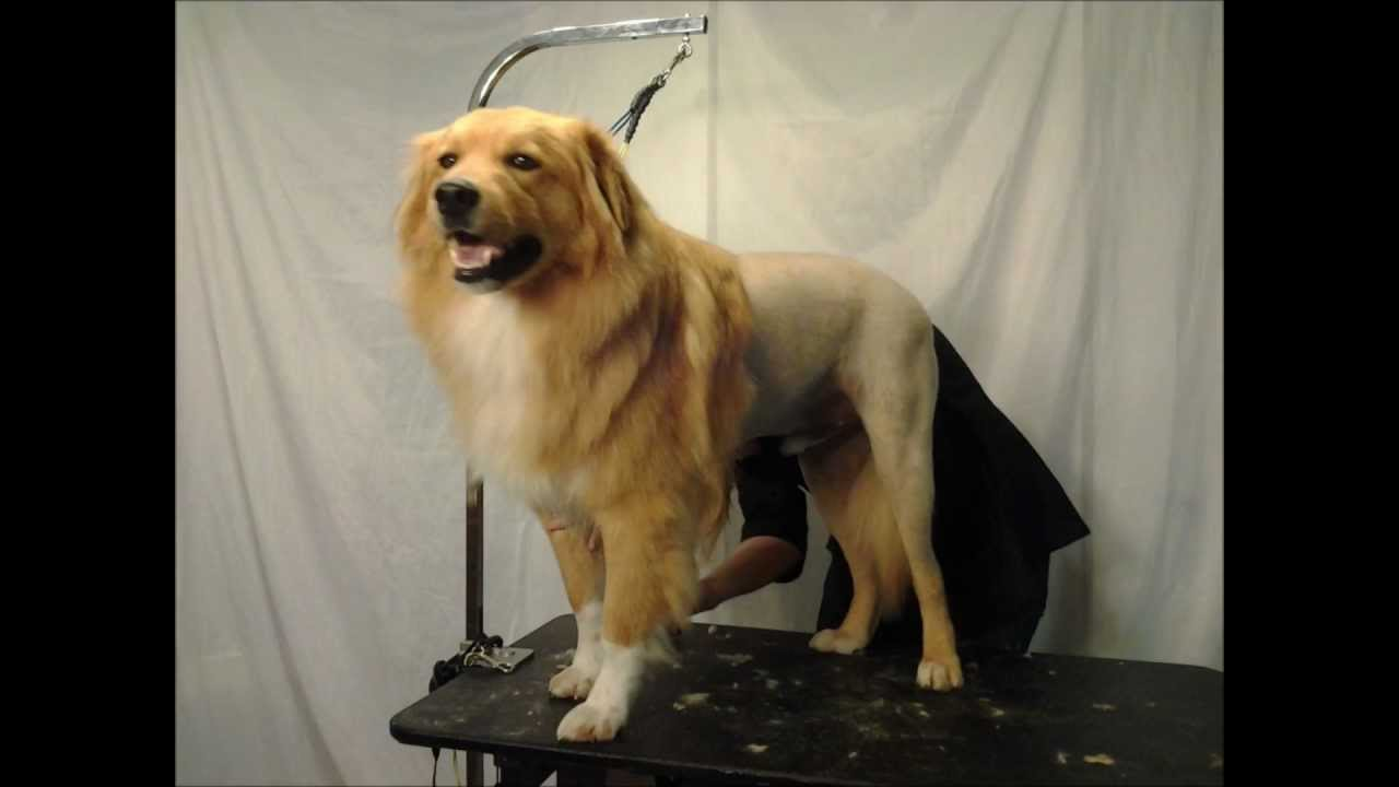 dog grooming houston lion cut movie hd retake - youtube