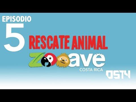 OST4 EPISODIO 5  DESDE EL PARQUE RESCATE ANIMAL ZOOAVE COSTA RICA