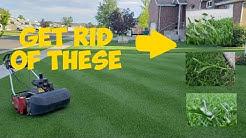 Tenacity and Speedzone  Herbicide How to kill 100+ weeds in your lawn   Tenacity & speedzone Results
