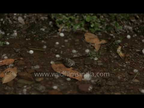 Hailstones pouring all over Landour turns it into a dream place