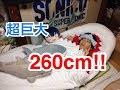 超巨大!津島善子のサメ型クッションベッドが届きました!【ラブライブ!サンシャイ…