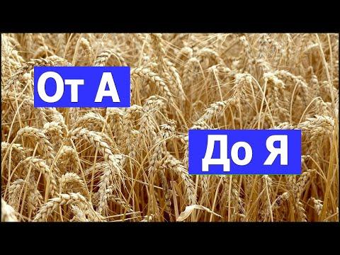 Выращивание пшеницы от А до Я после подсолнуха. #СельхозТехникаТВ