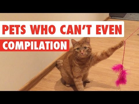 Struggle Bus Pets Video Compilation 2017