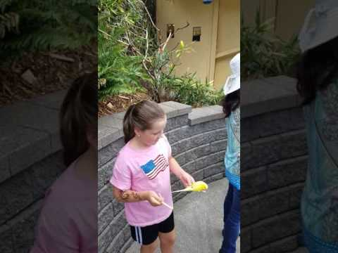 Feeding The Birds Part 2