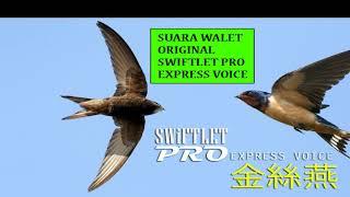 Suara Panggil Walet Pro Original Swiftlet Pro Express V.01 - HQ Voice 2018