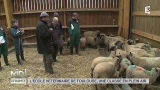 ANIMAUX : L'école vétérinaire de Toulouse, une classe en plein air