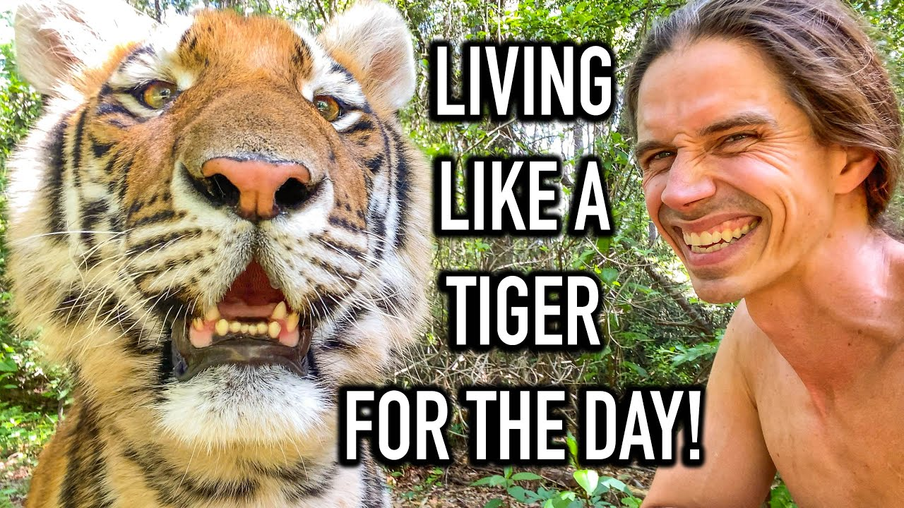 Living Like A Tiger For The Day! | Myrtle Beach Safari