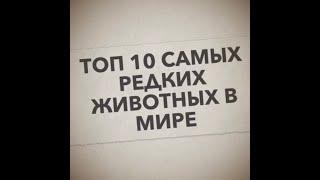 ТОП 10 САМЫХ РЕДКИХ ЖИВОТНЫХ В МИРЕ