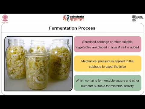 Fermentation of vegetables and fruits Lactic Acid